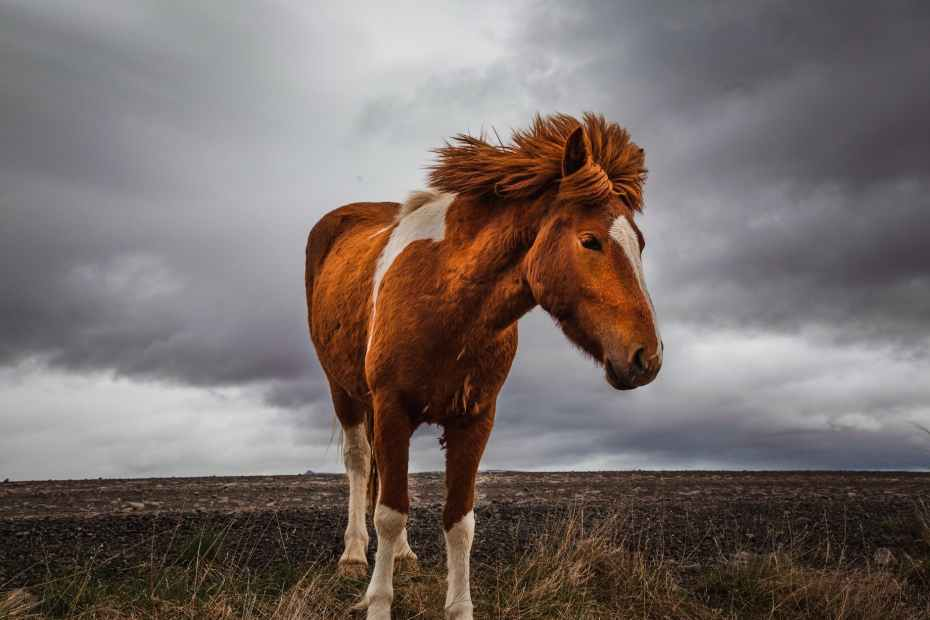 photo of horse on grass field under cloudy sky, coloured horse
