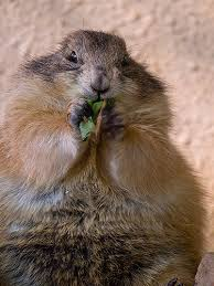 overeating squirrel