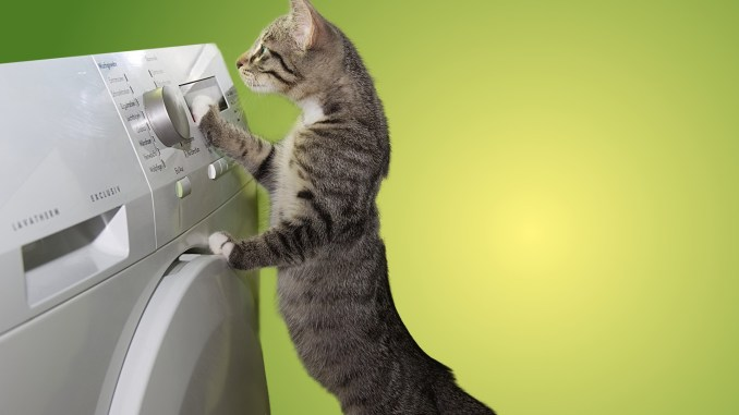 gatto su elettrodomestico