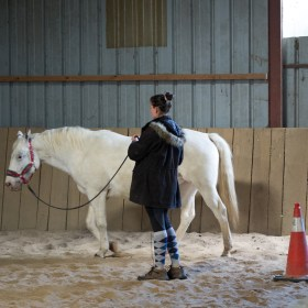 Equitation comportementale