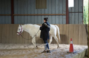 Equitation comportementale