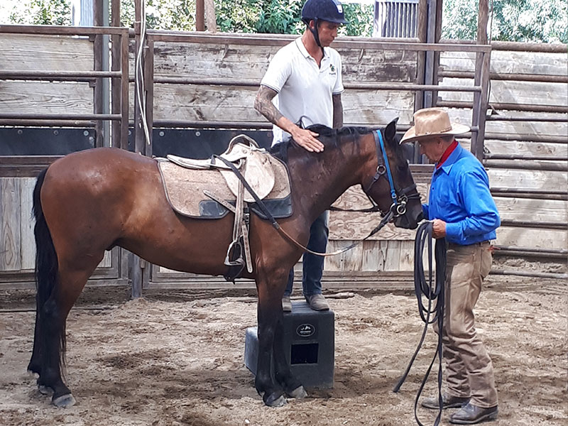 Simon Marrier d'Unienville, Monty Roberts Certified Instructor, working with Monty Roberts and Diego at Flag Is Up Farms