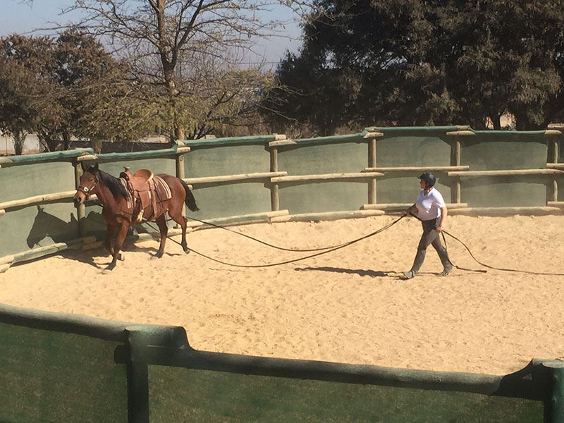 Student long lining horse in Monty Roberts Introductory Course of Horsemanship