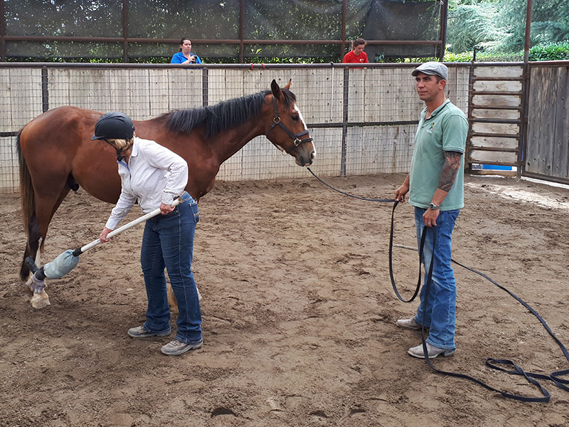 Desensitizing horse - Monty Roberts courses