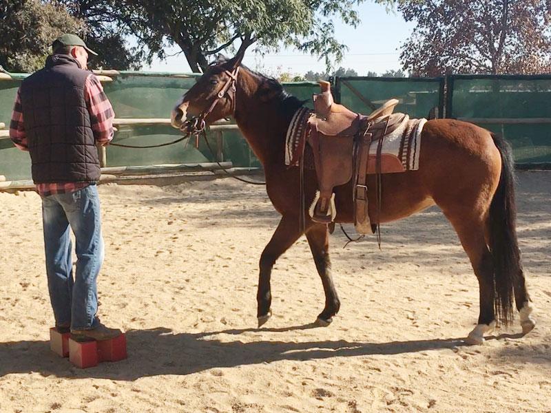 Equiville Horsemanship - horsemanship clinics - remedial horse classes