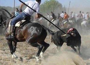 EQUO reclama la eliminación definitiva del denigrante espectáculo del Toro de la Vega