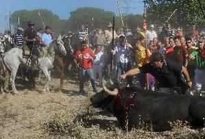 EQUO exige responsabilidades por los hechos ocurridos durante el toro de la vega