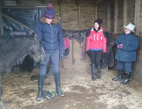 foal-handling