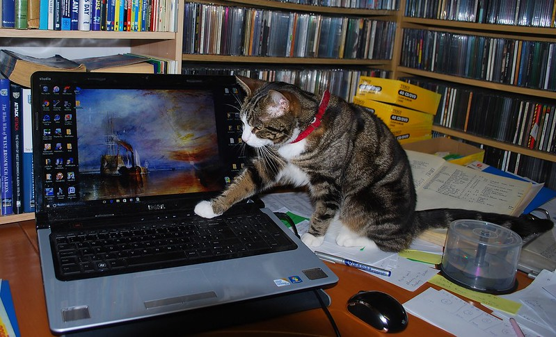 Cat with laptop computer