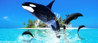 cetaceans 2 eraoflightdotcom