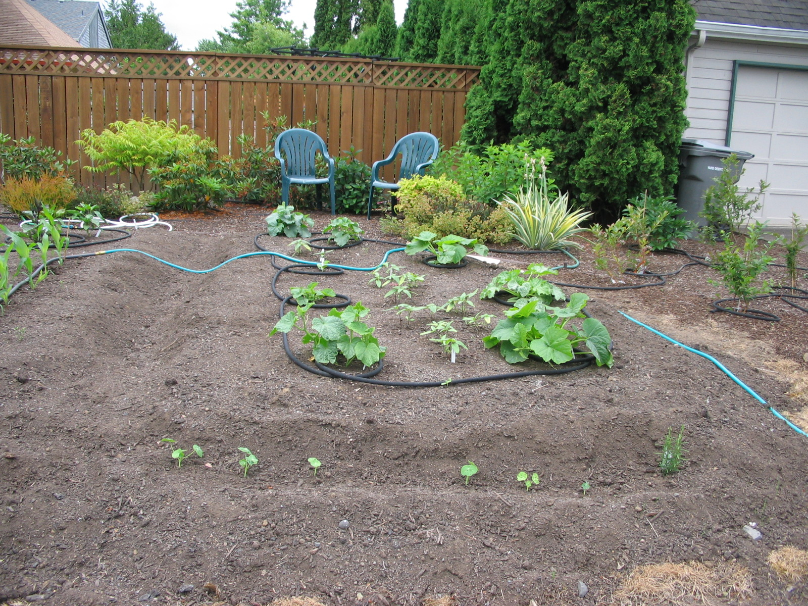Squash, cucumber, and sunflower section; young blueberries off to the right
