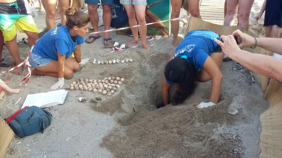 FCTs en la costa oeste del Peloponeso: rescatando y cuidando tortugas