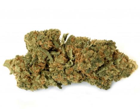 infiorescenza di the weed canapa legale