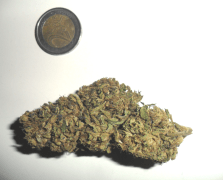 Bud Magic Forest di Soul Flower e moneta da due euro