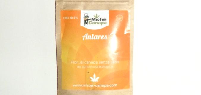 Bustina di canapa legale Antares di Mister Canapa