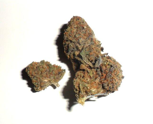Infiorescenza femminile di cannabis light Blueberry di Canapando