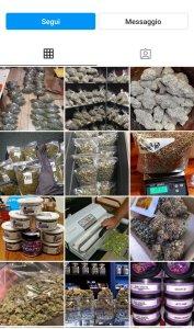 Plug Instagram cannabis scam
