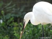 Aqua Zoo (Leeuwarden) 101