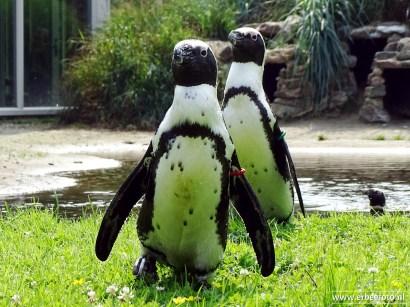 Aqua Zoo (Leeuwarden) 112