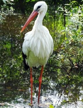 Aqua Zoo (Leeuwarden) 20