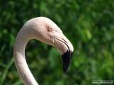 Aqua Zoo (Leeuwarden) 25