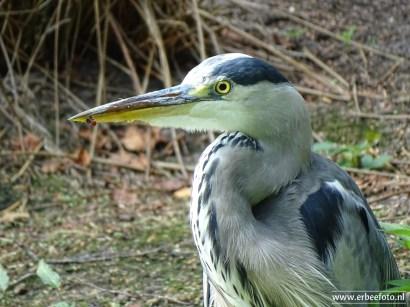 Aqua Zoo (Leeuwarden) 33