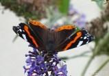 Vlinders 15