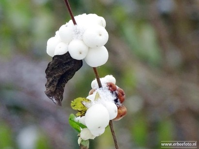 Sneeuw Noordhorn 01