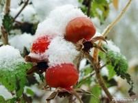 Sneeuw Noordhorn 03