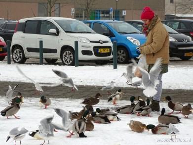 vogels kiryat onoplein 08