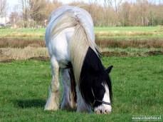 web_tinker_paard_rond_leekstermeer_02