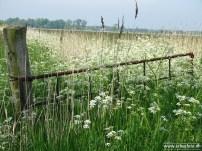 erbeefoto_dijkweg (richting boerakker) 01