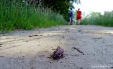ErBeeFoto_De Onlanden - kevertje (gewond)