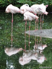 Burgers Zoo - Roze Flamingo 01