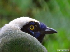 Burgers Zoo - Vogel 04