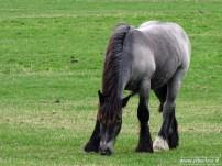 erBeeFoto_Paarden rondom Schouwerzijl 01