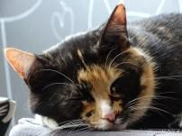 Kattencafe Op Zn Kop 08