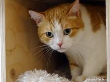 Kattencafe Op Zn Kop 12