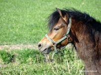 20200416_Paard in Weiland (Gaarkeuken)