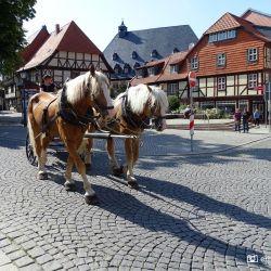 Paarden Altstadt Wernigerode