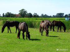 Paarden bij Garnwerd