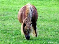 Ponny Mokkenburg