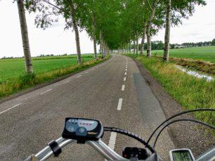 Weg richting Adorp met Berkenbomen