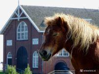 Pony Bij Electra, Groningen