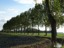 Weg met bomen (Ezinge)