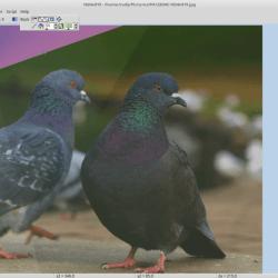 Gratis fotobewerking voor Windows Linux en AppleOSX