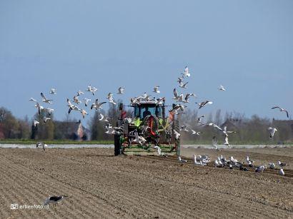 Boer met tractor op het land bij Zoutkamp