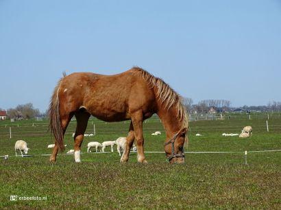 Paard bij Hekkum
