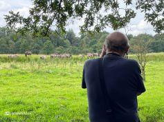 Konikspaarden fotograferen Ennemaborg Midwolda