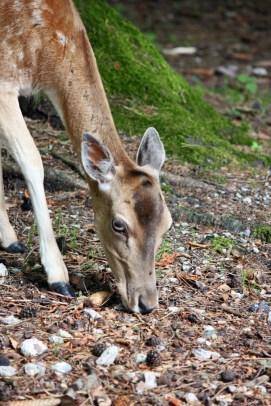 Bambi_3